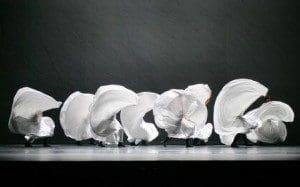 introdance messiah, white roses